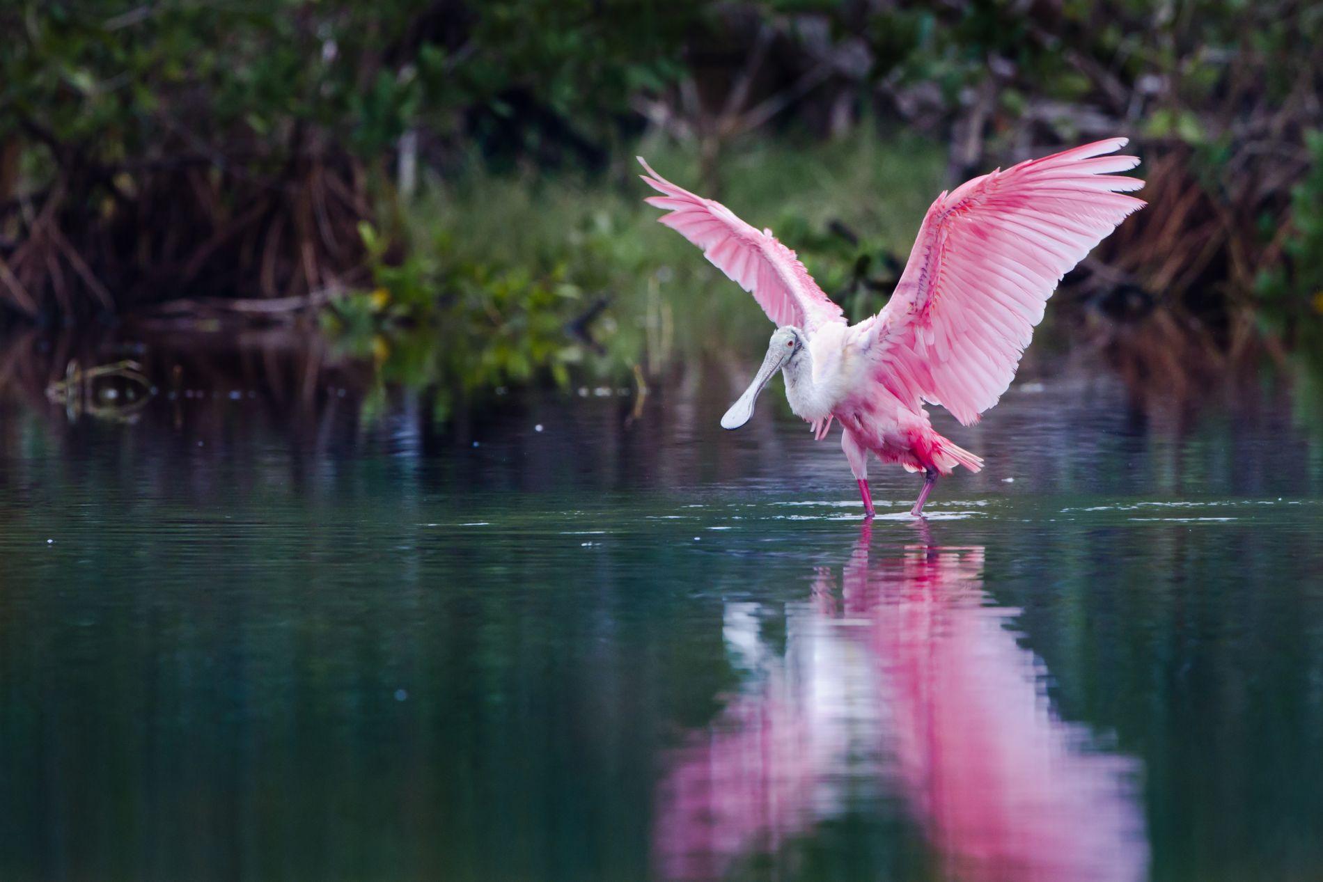 Everglades-11