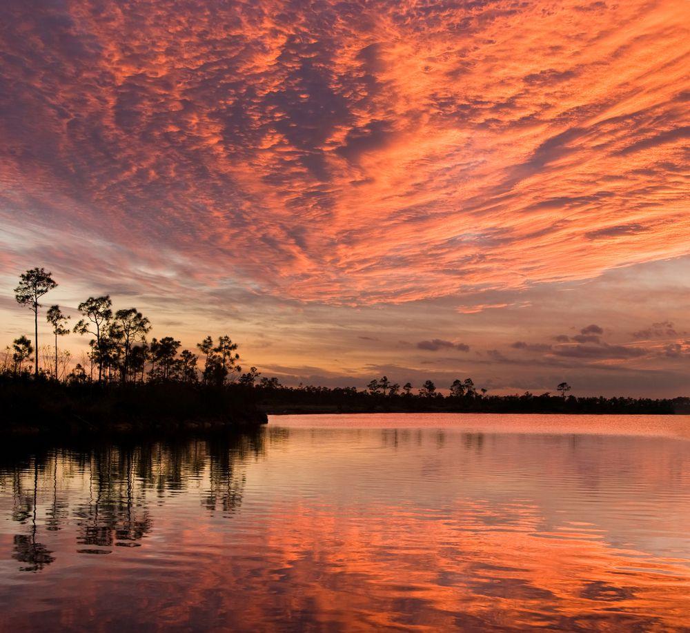 Everglades-5